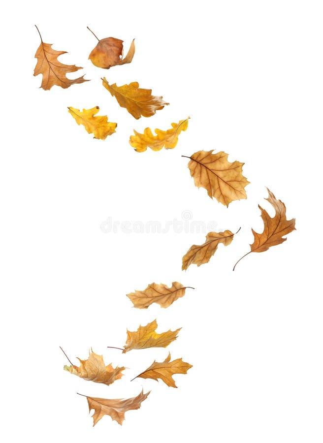Beautiful autumn leaves falling royalty free illustration