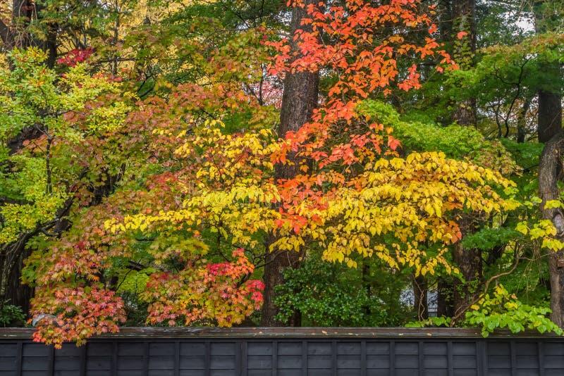 Autumn in kakunodate. Beautiful Autumn leaves in kakunodate Akita , Japan stock photos