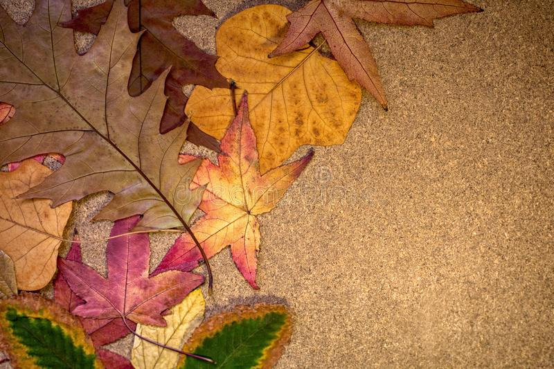 Beautiful autumn leaves on a wooden board royalty free stock photo