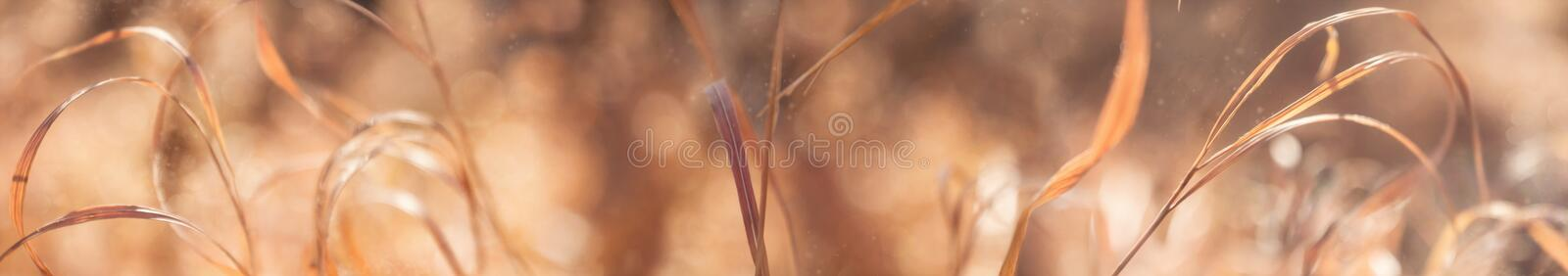 Beautiful autumn nature background with dry brown grass, bokeh and sunlight, seasonal rural country scene. Wide panorama format. For frame and banner,close up stock image