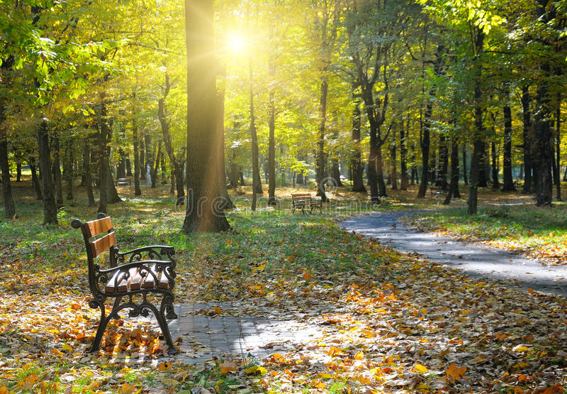 Download Beautiful Autumn Park  And Benches Stock Image - Image of nature, green: 46878115