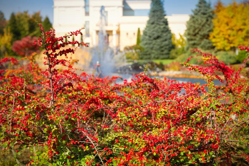 Beautiful autumn park with colorful trees lake and fountain. Autumn in park.  stock image