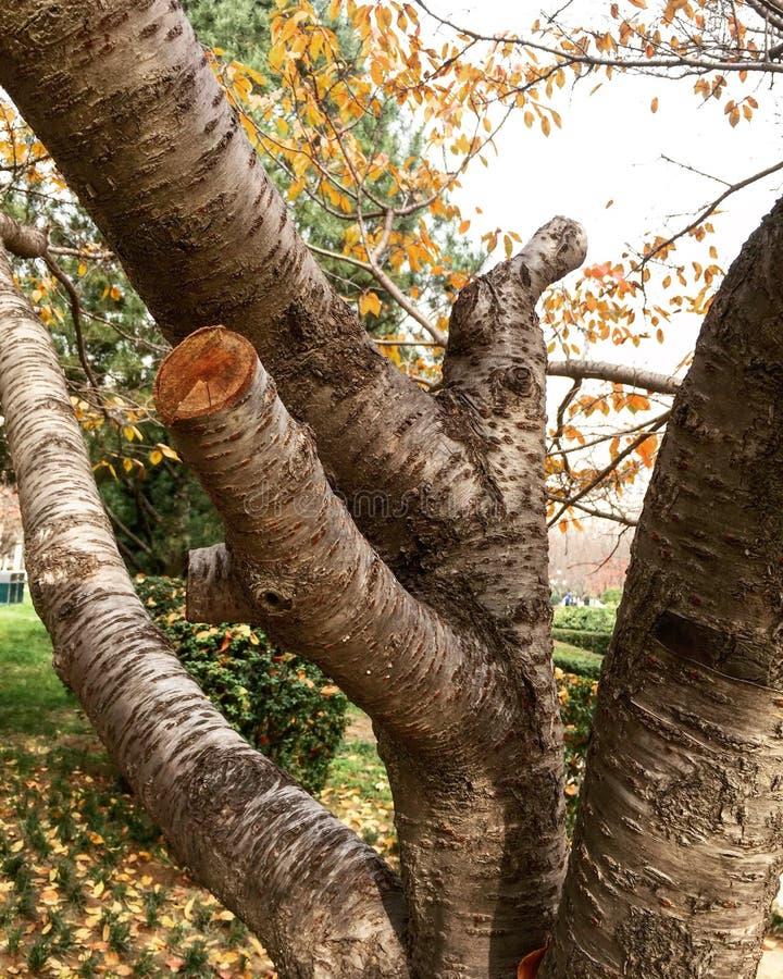 beautiful autumn plant royalty free stock photography