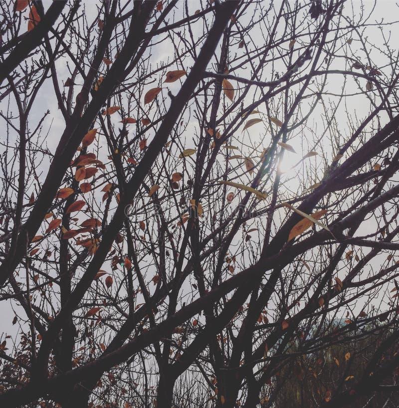 beautiful autumn plant stock photos