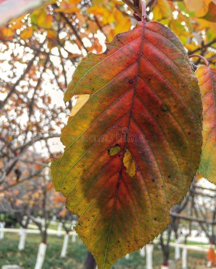 beautiful autumn plant royalty free stock photo