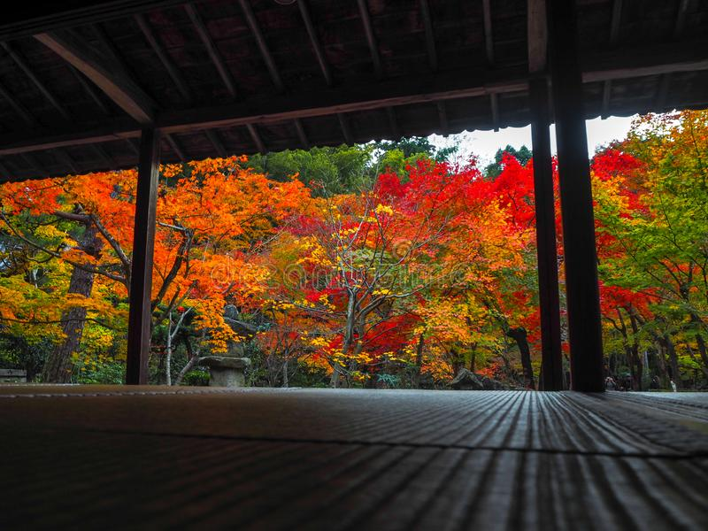Beautiful autumn scene of colorful maple trees in japanese temple garden for background. Kyoto, Japan royalty free stock images