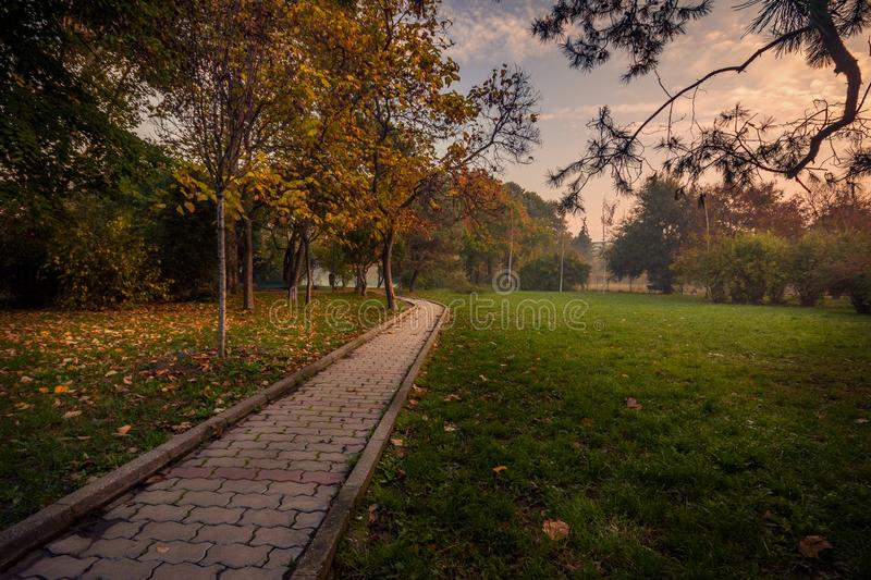 Beautiful autumn scene in the morning in the park on an alley stock photo