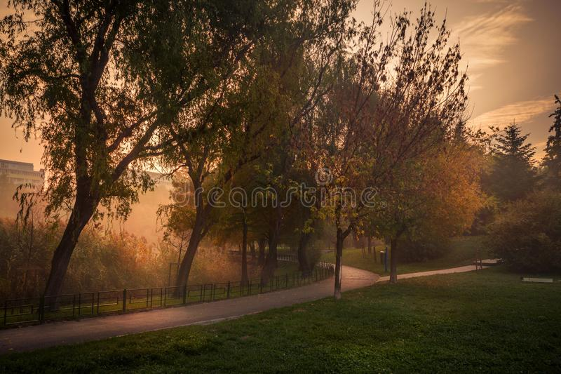 Beautiful autumn scene in the morning in the park on an alley ne stock images