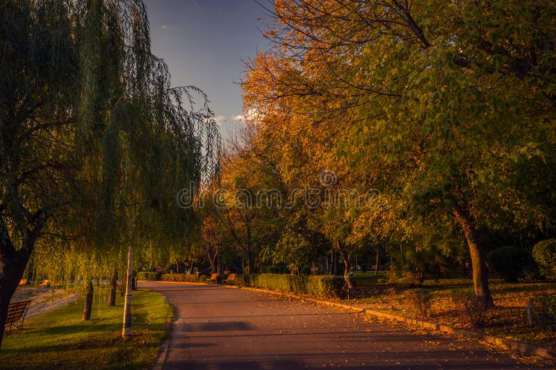 Beautiful autumn scene in the morning in the park on an alley stock image