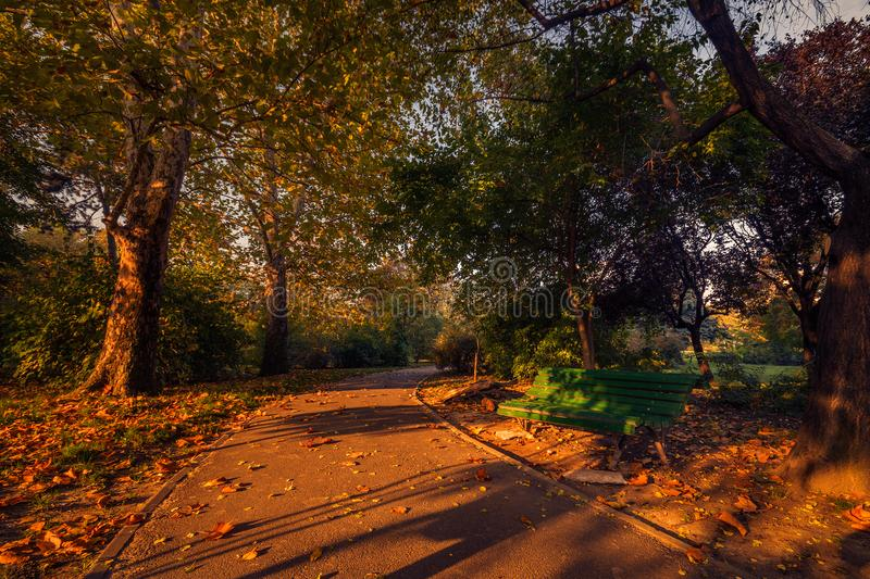 Beautiful autumn scene in the morning in the park on an alley stock photos