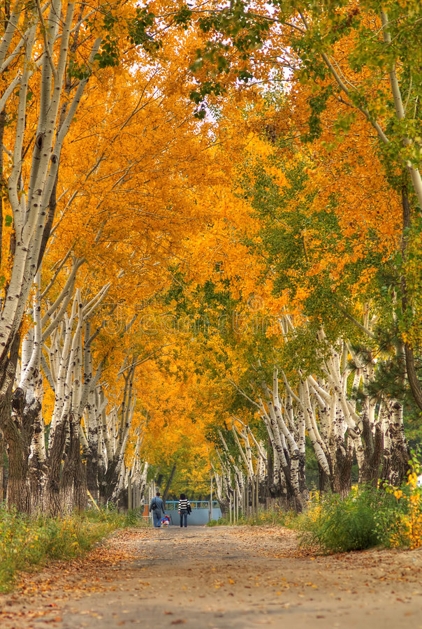 Download Beautiful  autumn scenery stock photo. Image of child - 3557106