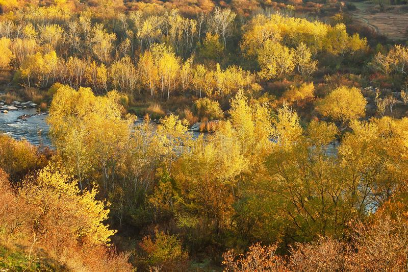Beautiful autumn scenery with yellow trees on the banks of the river, fall season outdoor theme with atmosphere. Beautiful scenery with yellow trees on the banks royalty free stock photography