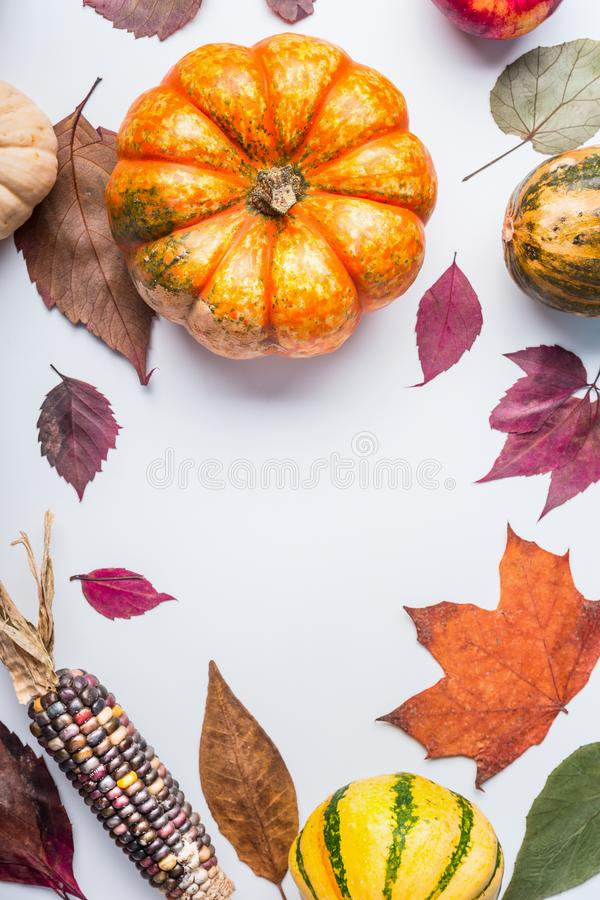 Beautiful autumn seasonal background with pumpkins , various fall leaves, and corn on white table background, top view stock image
