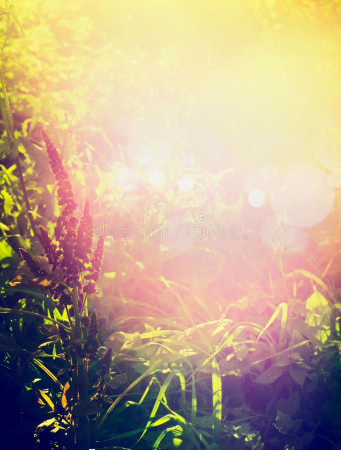 Beautiful autumn or summer nature background with herbs, grass and flowers in garden or park over sunset and bokeh light stock images
