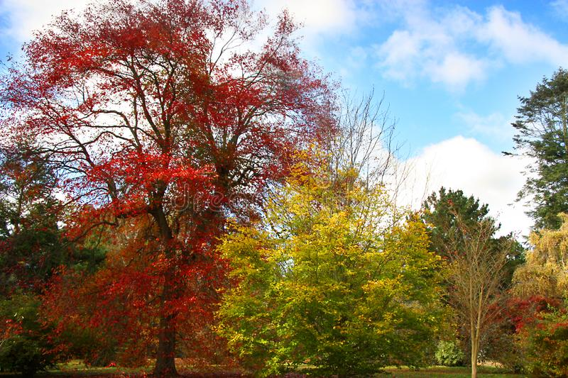Beautiful autumn trees and blue sky. royalty free stock photography
