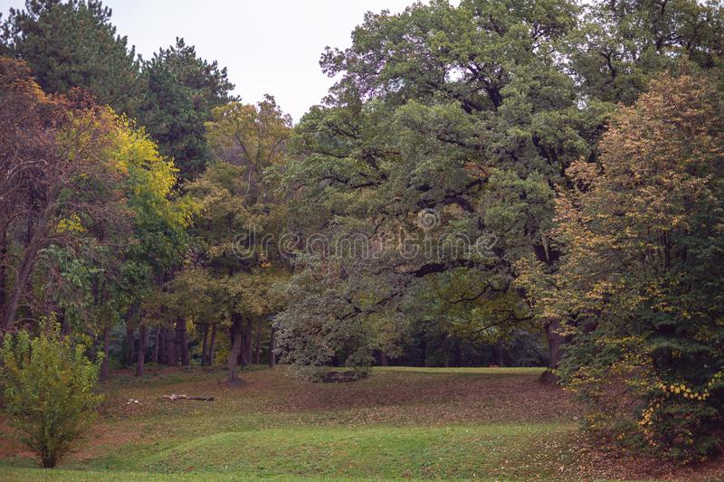 Beautiful autumn trees in park royalty free stock images
