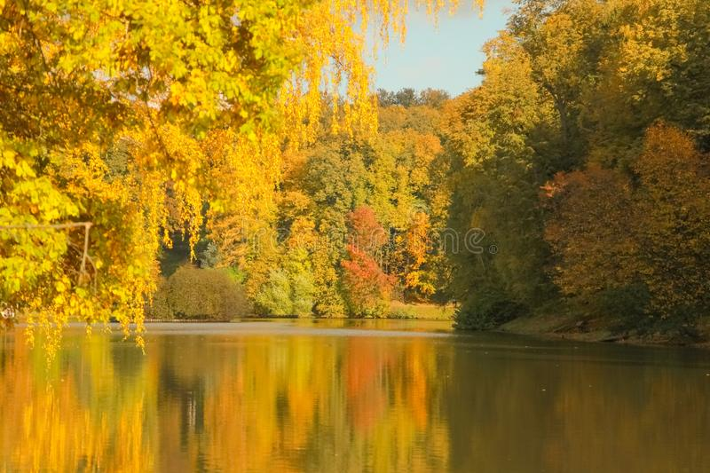 Beautiful autumn trees with yellow branches and leaves near water with reflection with nobody. Nature in the fall beautiful trees with colorful leaves royalty free stock images