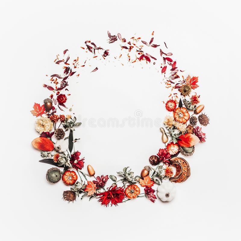 Beautiful autumn wreath or circle frame made with pretty fall leaves, chestnuts, nuts, acorns and flowers on white background. Top royalty free stock photography