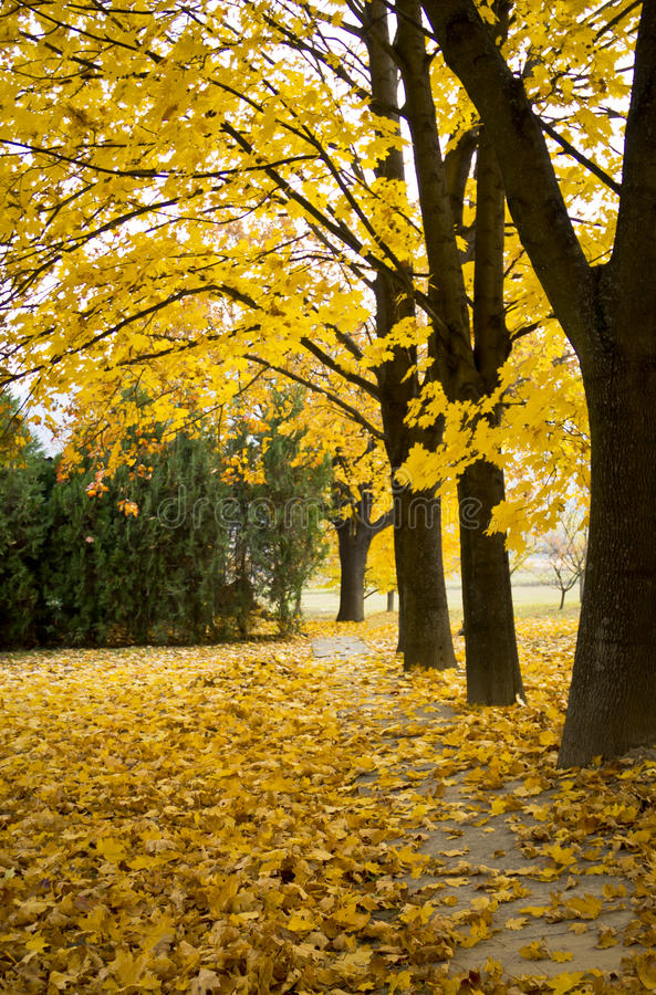 Beautiful Autumn With Yellow Leaves Stock Photography