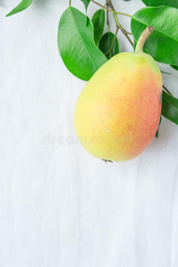 Beautiful Autumnal Background. One Ripe Organic Pear of Pastel Colors Yellow Red Green Tree Branch on White Linen Cotton royalty free stock photos