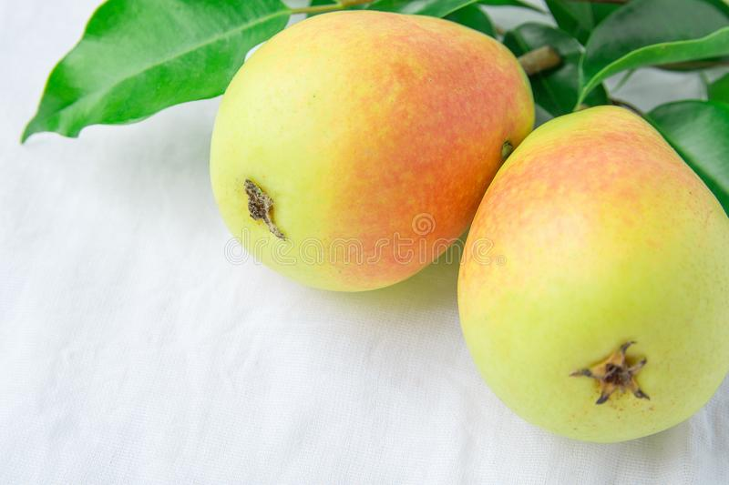 Beautiful Autumnal Background. Ripe Organic Pears of Pastel Colors Yellow Red Green Tree Branch on White Linen Cotton. Minimalist royalty free stock image