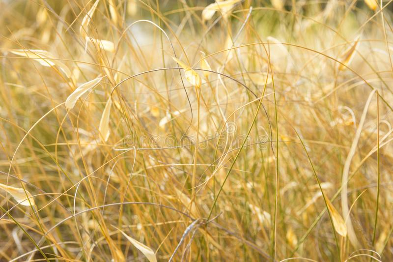 Beautiful Autumnal Background Wallpaper Meadow Field with Dry Tender Plants Flowers Grass Warm Earthy Tones Golden Glow. Cozy Fall royalty free stock image