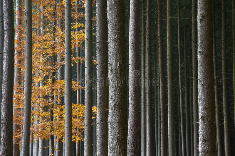 Beautiful autumnal forest. In Bavaria, Germany stock photo