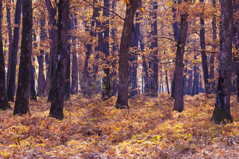 Beautiful Autumnal park. Beauty nature scene. Autumn landscape, Trees and Leaves, foggy forest stock photography
