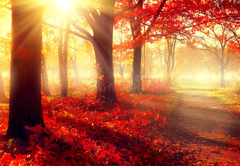 Beautiful autumnal park in sunlight royalty free stock photo