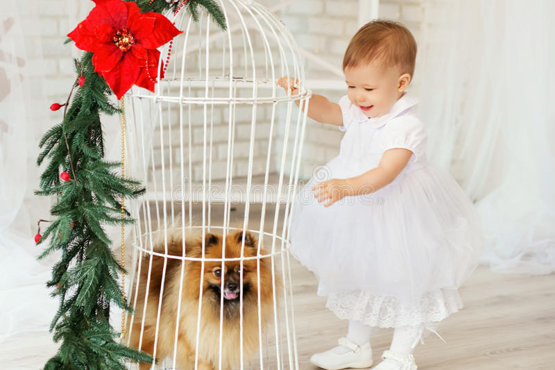 Beautiful baby girl playing with a puppy in the interior with Ch. Portrait of a beautiful baby girl playing with a puppy in the interior with Christmas stock photo