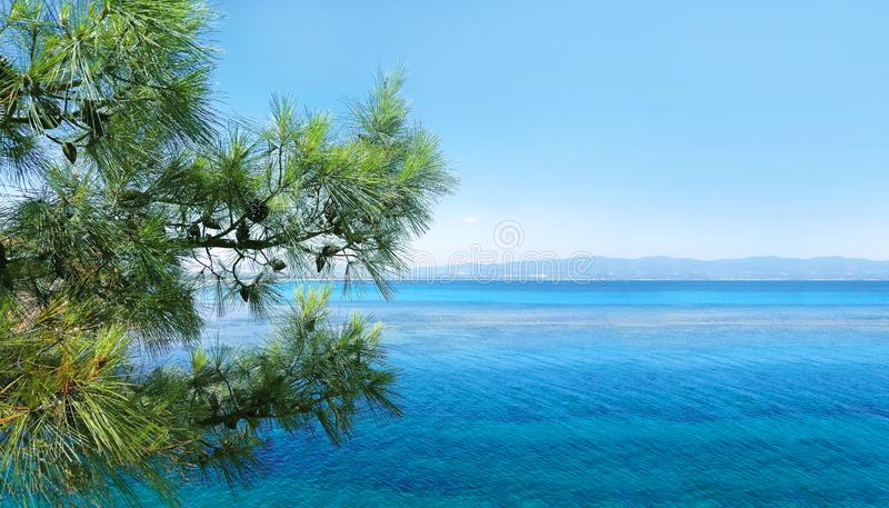 Beautiful background  seascape of horizon line, calm charming blue sea and peaceful bay with green plants pine tree. Beautiful background amazing seascape of royalty free stock photo