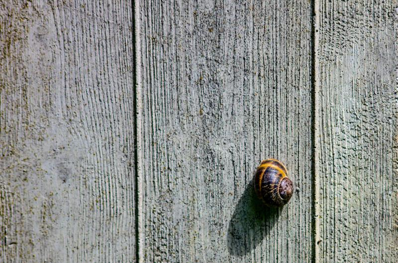 beautiful background with cement wall as a texture enriched with a solitary snail attached stock images