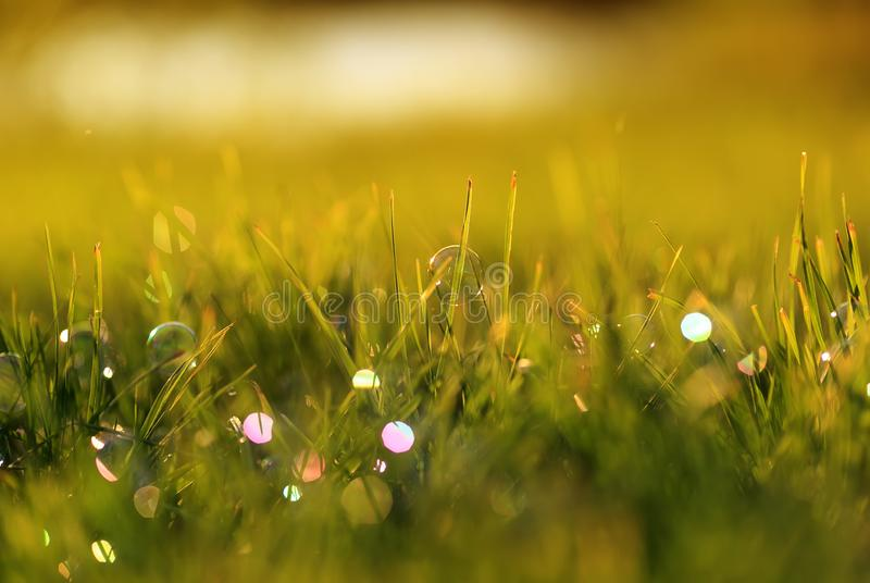 Beautiful background with festive multi-colored, soap bubbles and circles lie and shimmer on the green shiny grass on the summer royalty free stock images
