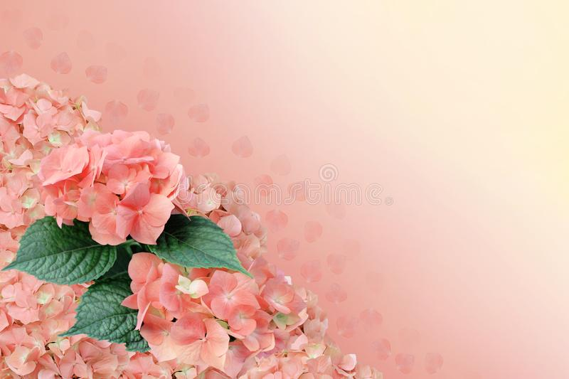 Beautiful background with hydrangea. stock image