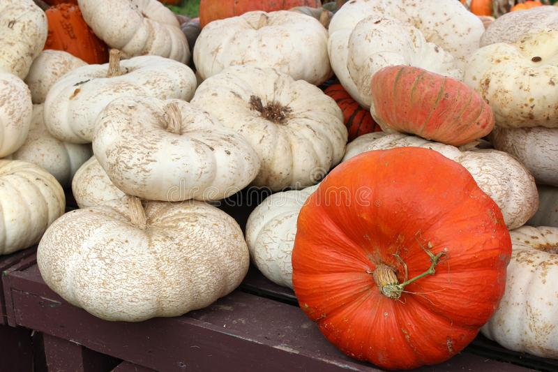 Background image of bright and colorful Fall pumpkins, squash and gourds on wood table at farmers market stock image