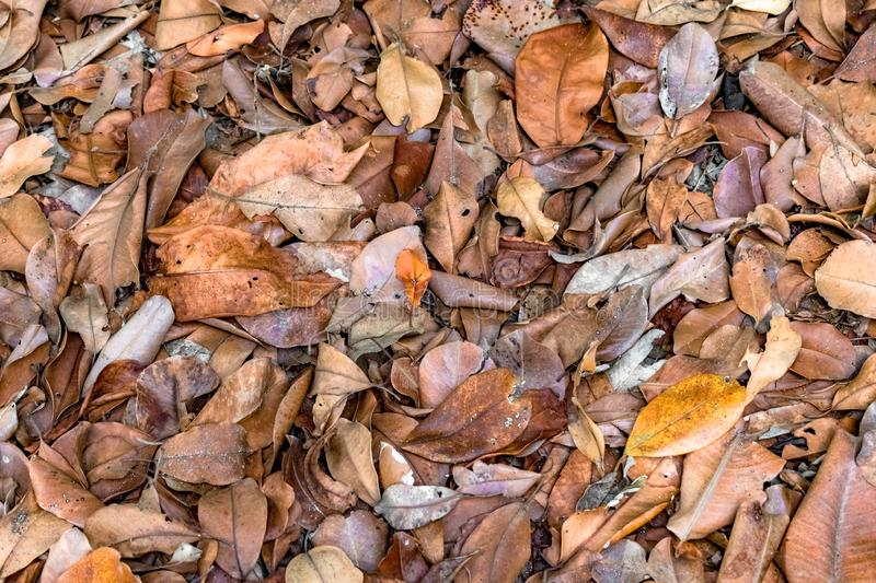 Beautiful background photo of decomposing leaves in Autumn season. The leaves so piled up in heap are used as organic compost. stock photo