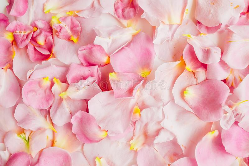 Beautiful background with pink roses petals. Flat lay, top view. Pastel pattern of flower petals royalty free stock photos