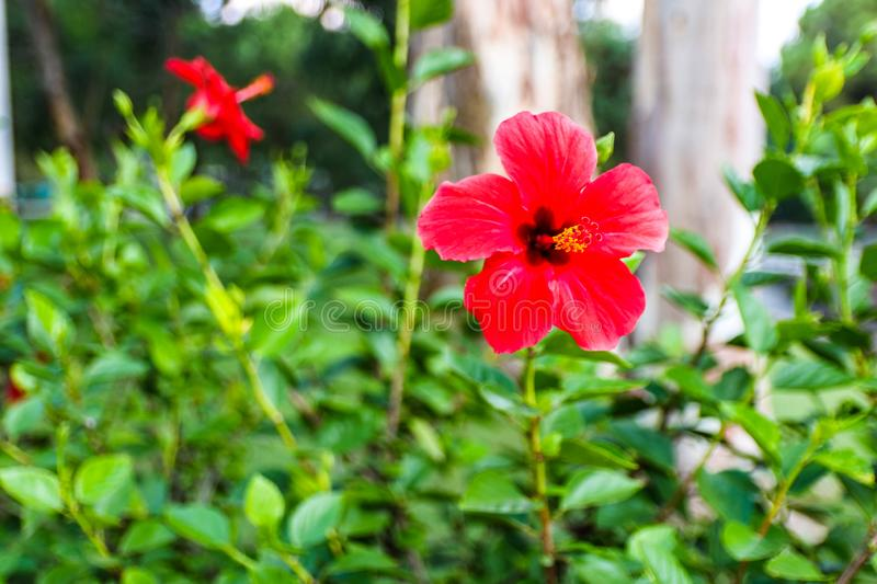 Beautiful background with a red flower and green plants in the park royalty free stock images