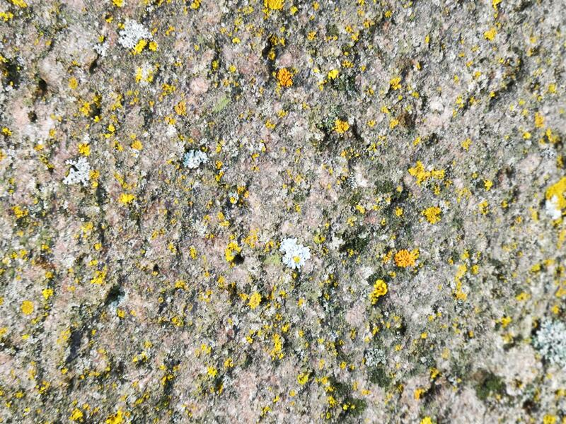 The background of the moss stone royalty free stock image
