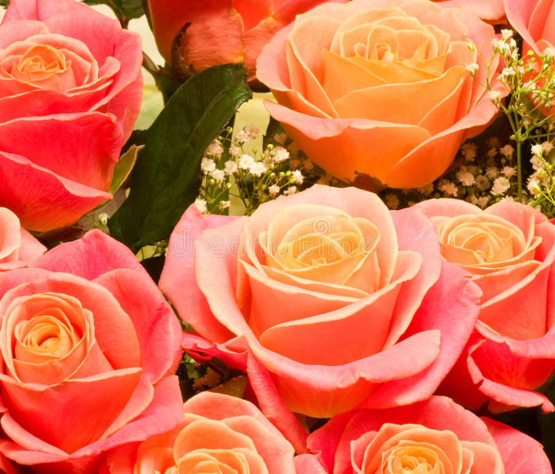 Download Beautiful Background Of Rose Stock Photo - Image: 22780790
