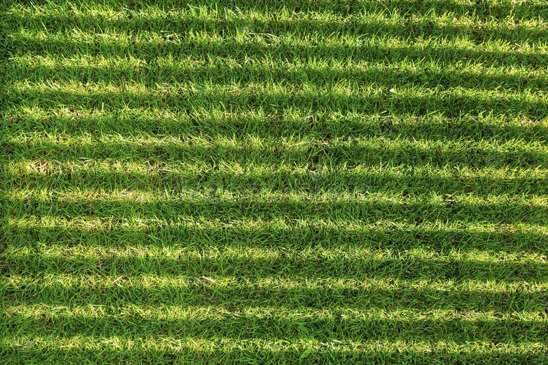 Beautiful background texture in form of dark and light shadow lines on green grass field. Summer backgrounds royalty free stock image