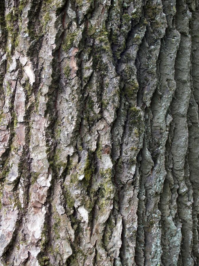 The beautiful bark with green moss stock photography