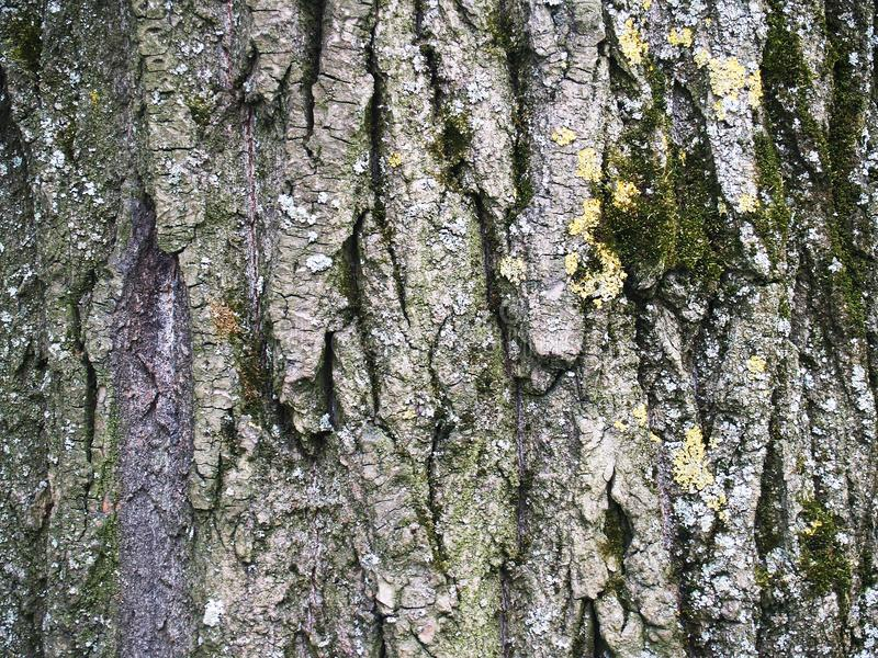 The beautiful bark with green moss stock image