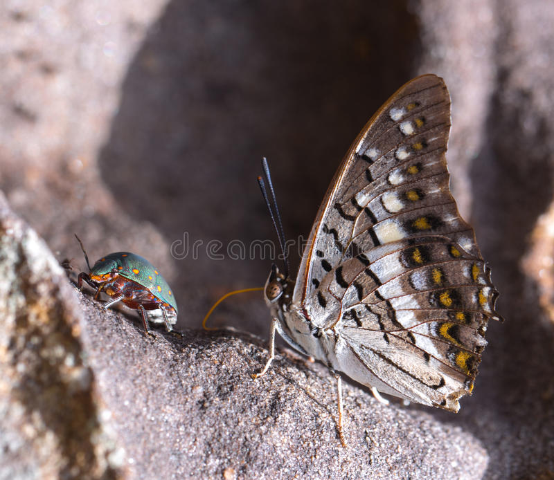Beautiful battrefly stock image