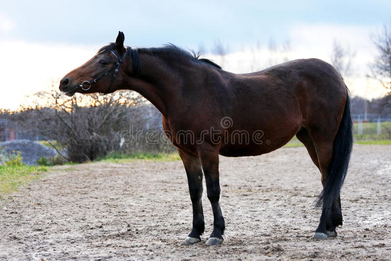 Beautiful bay horse in automn stock photos