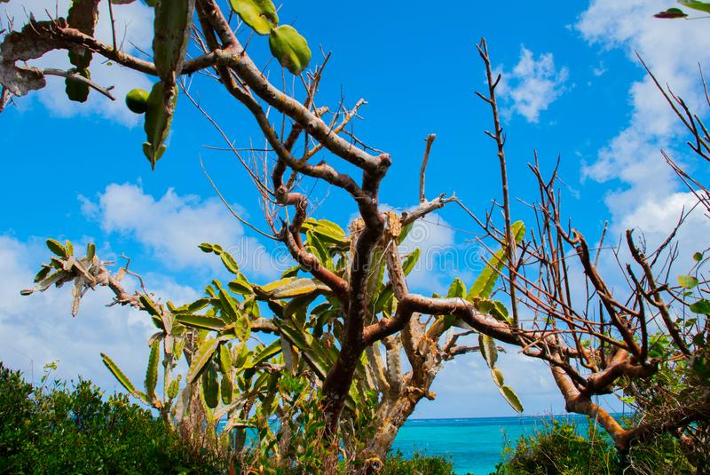 Beautiful beach bay turquoise sea water and cactus. Holguin, Cuba. royalty free stock photo