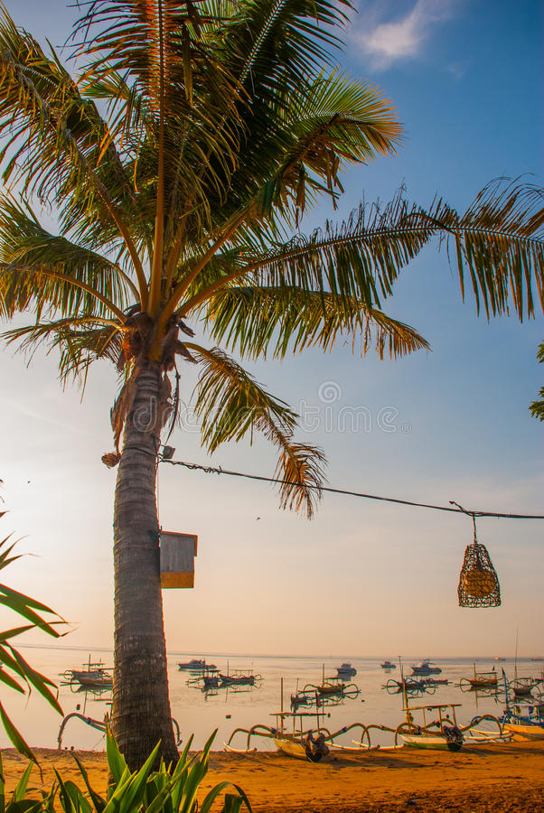 Beautiful beach with a cafe in Sanur with local traditional boats Palm trees on the island of Bali at dawn. Indonesia stock photography