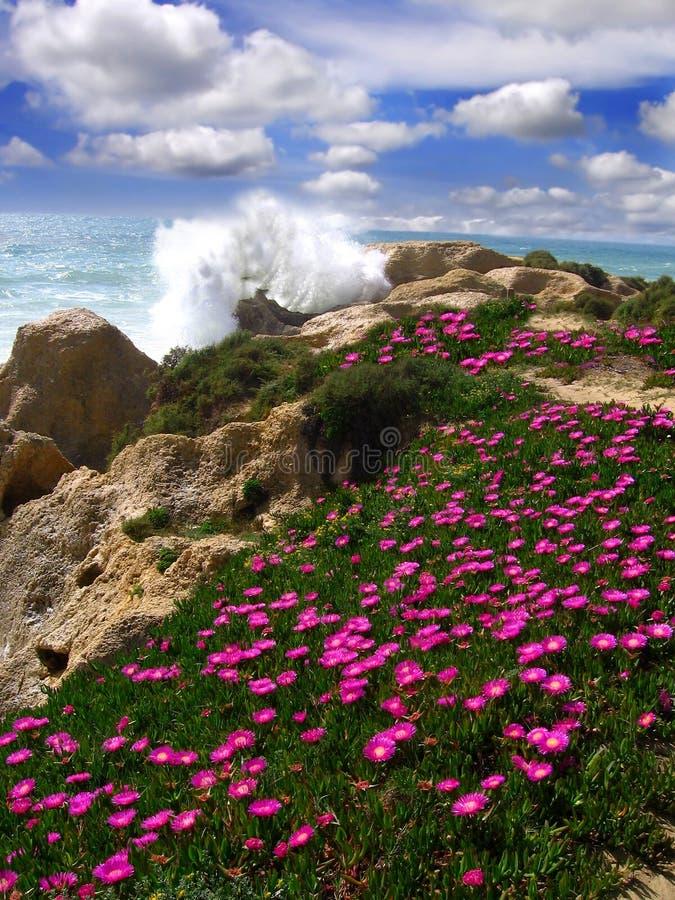 Beautiful Beach With Flowers, Algarve, Portugal Stock Photo