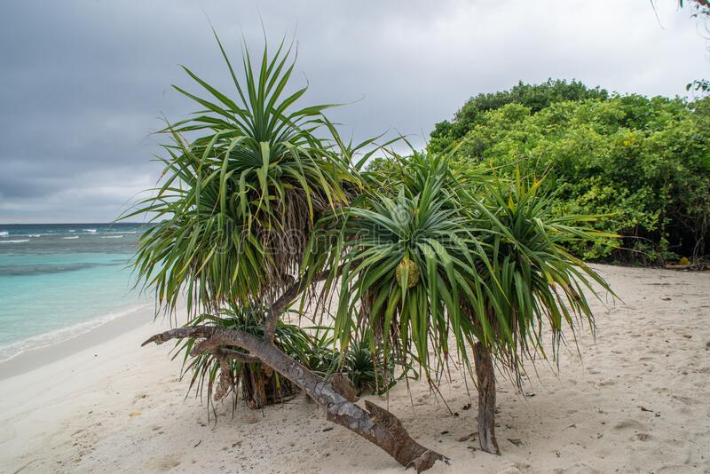 Beautiful beach landscape during rainy season time with trees, bushes and the ocean at the tropical island stock image