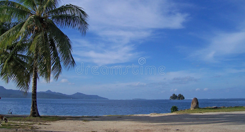 Beautiful beach with palm tree royalty free stock photos